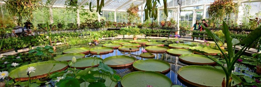 waterlily-house_0